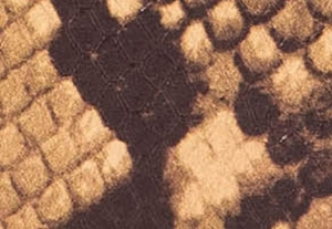 カンタロープ